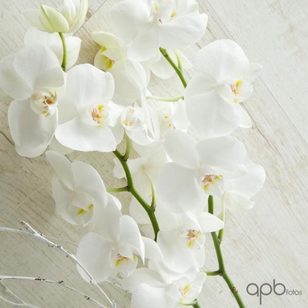 orquideas_botanica24