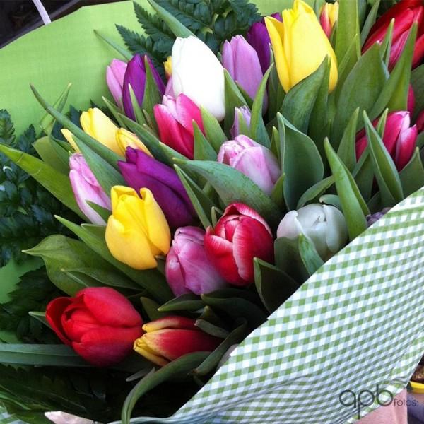 tulipanes_botanica24